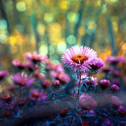 pinkflower_by_kokoszkaa