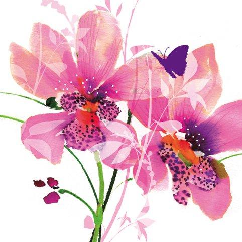 wild_garden_butterfly