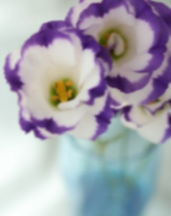 purple-flowers-white-glass
