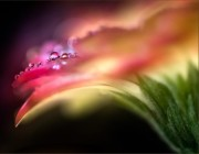 Vefday-flower-bubbles-digital