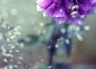 Vefday-purple-flowers-bokeh