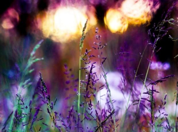flowers-garden-purple-bokeh-vef-day