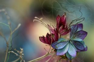 crimson-leafy-vefday